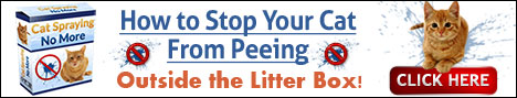 Stop Your Cat From Peeing